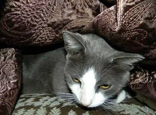 Cat_rescued_katrina