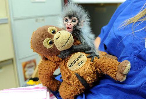 Baby_monkey_zoo2