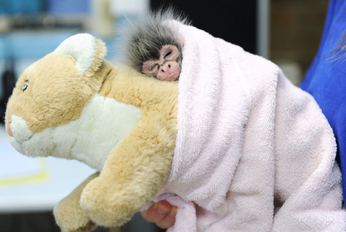 Baby_monkey_cute_rejected