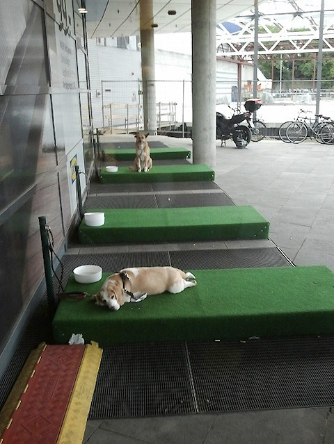 Ikea-germany-now-has-parking-lots-for-dogs