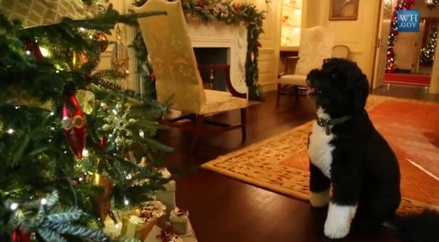 Bo-obama-dog-holiday