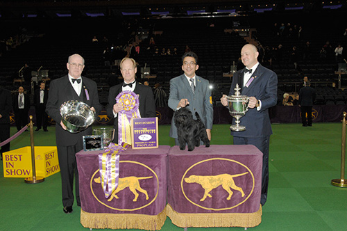 2013_westminster_kennel_club_dog_show_winner
