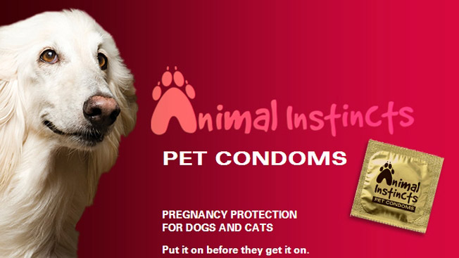 Pet-condoms-aspca