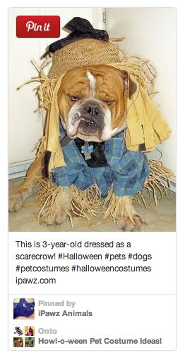 Dog-halloween-costume-scarecrow
