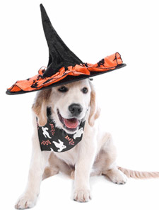 Halloween-dog-pet-safety-tips