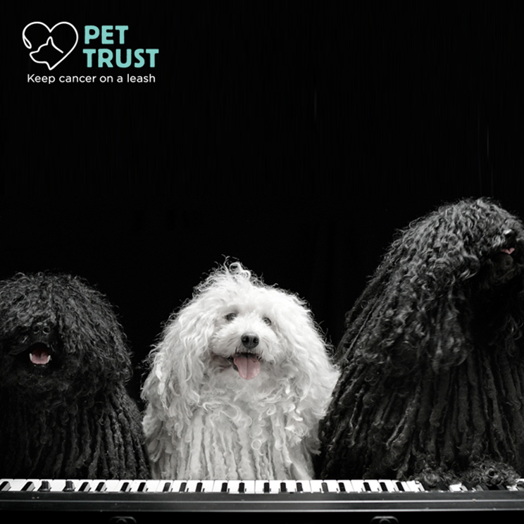 Dogs-sing-cure-pet-cancer