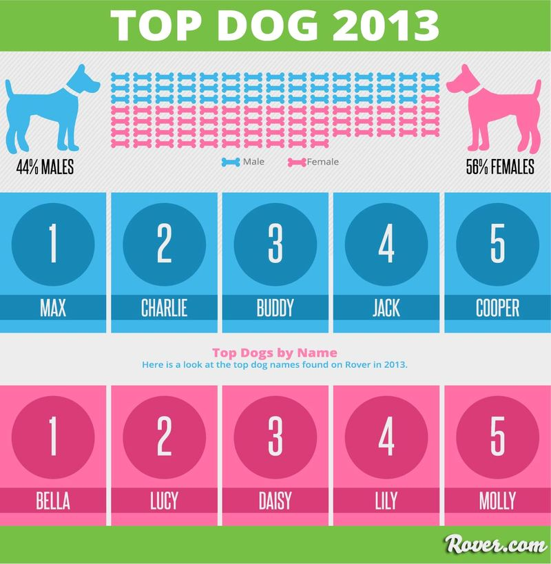 Top-dog-names-2013