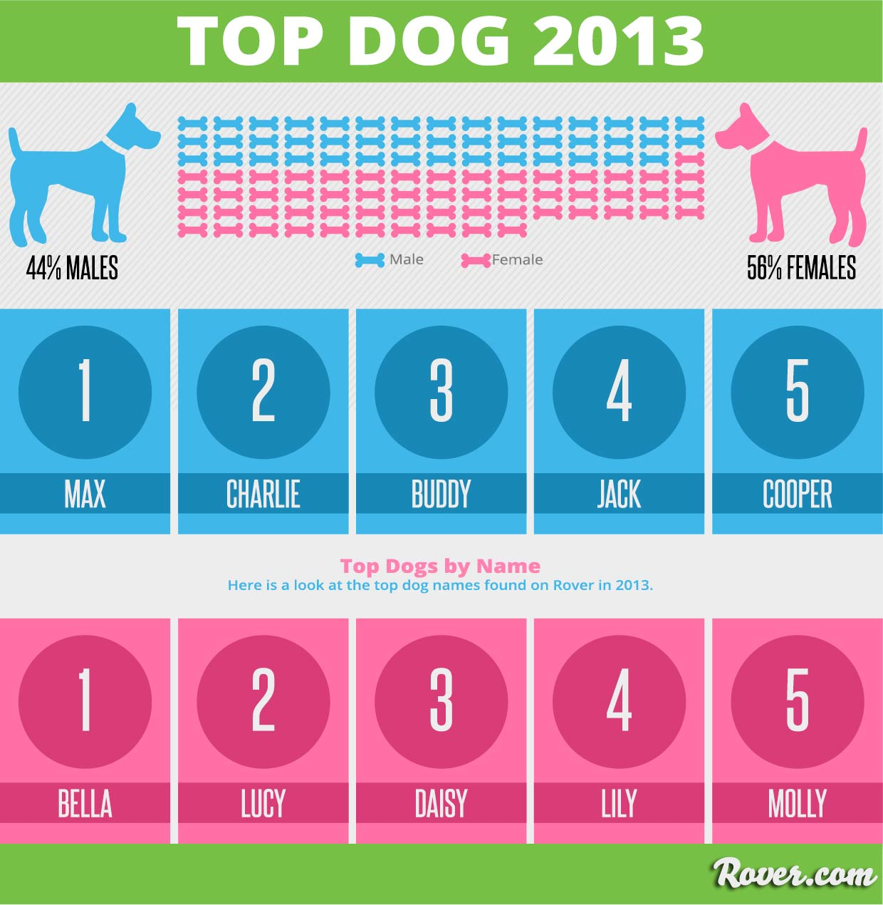 Max And Bella Are The Most Popular Dog Names In 2013
