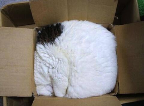 Cats-in-cardboard-boxes-strange-places