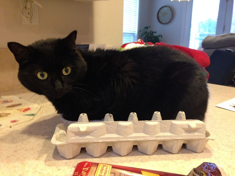 Funny-cat-sitting-egg-carton